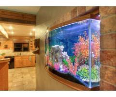 Aquarium Designer Service available