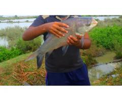 Fish Farming Business