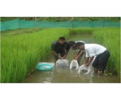 profitable business for fish farming