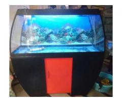 Fish Aquarium Huge and Beautiful Low Price Available For Sale In Islamabad