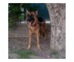 Dogs - page 8 - Local Ads - Free Classifieds and Job Ads in