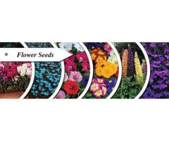 Flower names rose  plants seed purple  blue   blossom white  yellow plants
