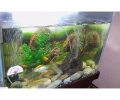 New Aquarium With 20 Small Chic Lids Fish Available For Sale In Karachi