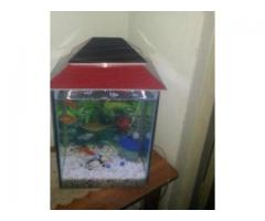Aquarium With All Accessories Wooden Roof For Sale in Karachi