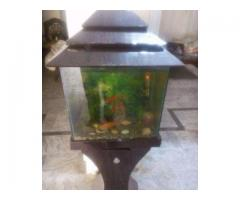 Well Decorated Aquarium With 6 Fish Available For Sale In Islamabad