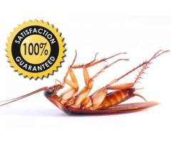 20% off on all services By Evergreen Fumigation Service