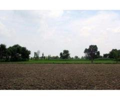 Agricultural Land Size 23 Acre Reasonable Price For Sale In Hafizabad