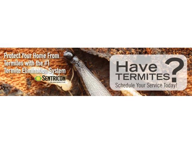 "Bismillah fumigation "" Termite Control"