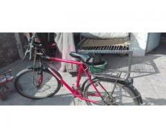 Phoenix Gare cycle for sale in good amount