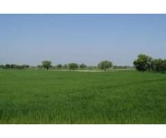 35 ACRE Farmhouse Is Available For Sale IN GOOD AMOUNT