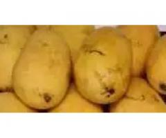 Mangoes/Vegetables, Sohan-Halwa. FOR SALE