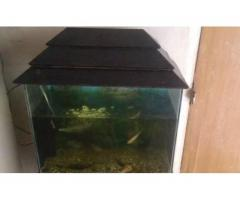 Aquarium with 2 chiclids for sale