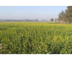14.5 ACRE Agricultural Land, Sheikhupura FOR sale in good amount