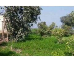 5 ACRES Agricultural Land, Jahania Mandi Khanewal for sale