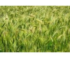 I am interested to sell my agricultural land in good amount