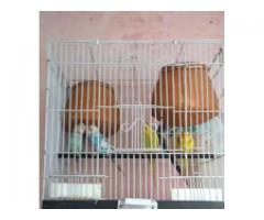 2 jory pinjra b sath for sale in good amount