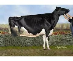 Dairy Farm Easy installment to get the secure future