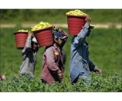 Need hardworking people for job salary is good