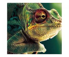 Buy top quality Reptile Breeding Box nomoypet
