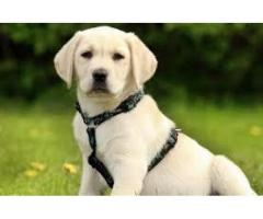 Dogs - page 4 - Local Ads - Free Classifieds and Job Ads in