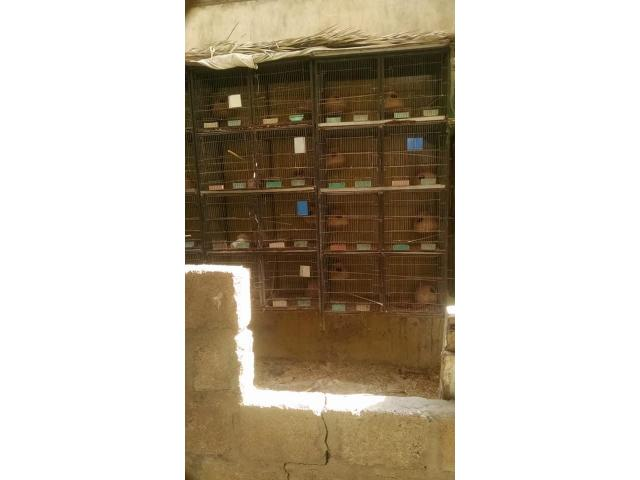 1 5*1 5 3 Cage 8 portion for sale Price 3000 each Location