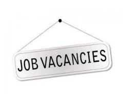 Jobs Vacancies Are Available in Different Department in Peshawar