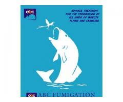 Rats Control serivces by ABC Fumigation - Karachi